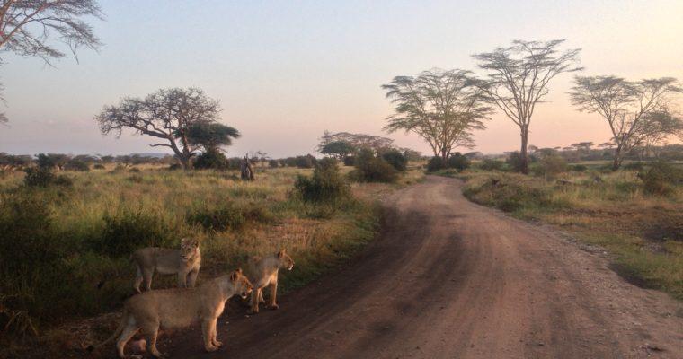 Tanzania – kraina bezkresnych równin Serengeti, rajskich plaż Zanzibaru i wiecznych śniegów Kilimandżaro